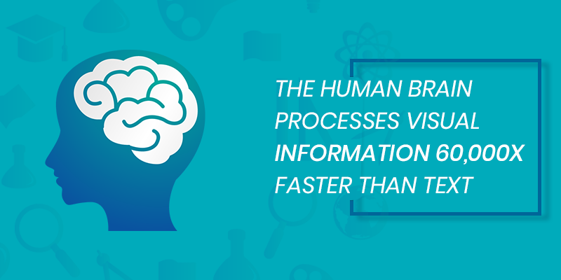 Human Brain Information